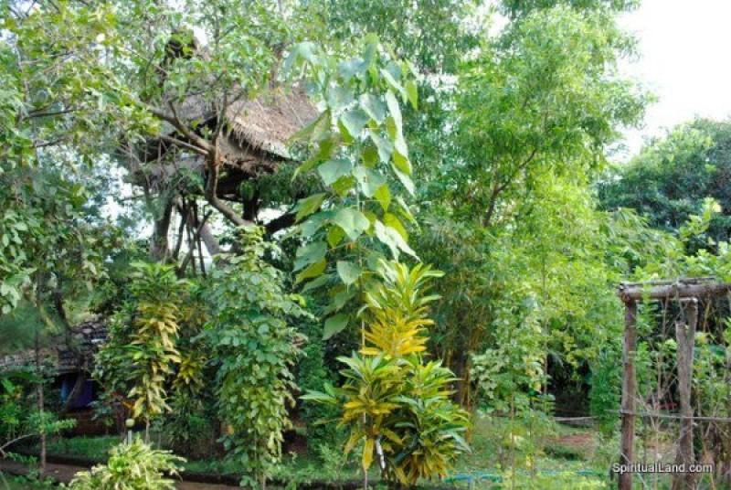Большой дом дерева
